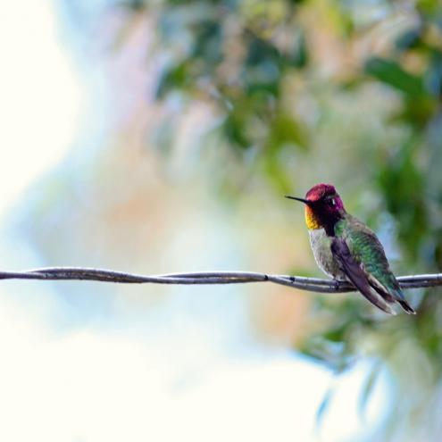 La Villa Nicolo et le colibri